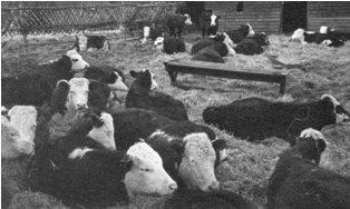 Pictures of New House Farm, Hartley taken by Winifred Iddison, about 1960