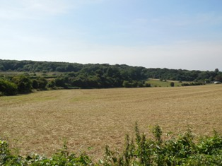 Hartley Wood from junction of Hartley Bottom Road, August 2013