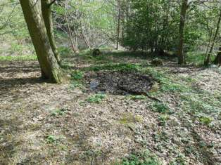 Dew pond at Foxborough Wood, Hartley, April 2014