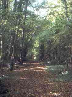 Hartley-Kent: Fairby Lane Woodland at end of road